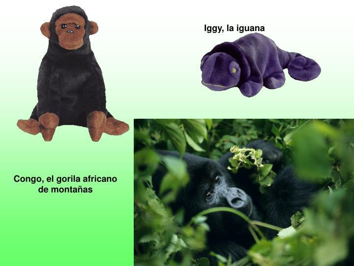 Iggy, la iguana