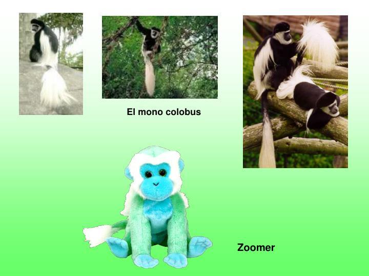 El mono colobus