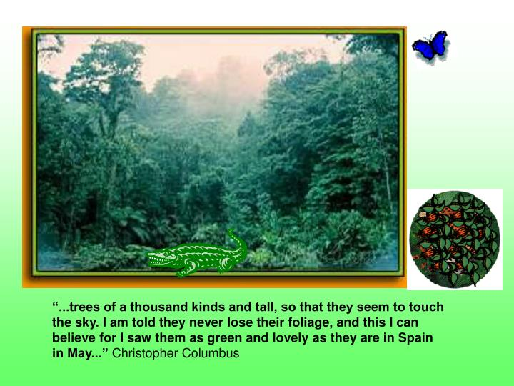 """""""...trees of a thousand kinds and tall, so that they seem to touch the sky. I am told they never lose their foliage, and this I can believe for I saw them as green and lovely as they are in Spain in May..."""""""