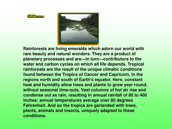 Rainforests are living emeralds which adorn our world with rare beauty and natural wonders. They are a product of planetary processes and are—in turn—contributors to the water and carbon cycles on which all life depends. Tropical rainforests are the result of the unique climatic conditions found between the Tropics of Cancer and Capricorn, in the regions north and south of Earth's equator. Here, constant heat and humidity allow trees and plants to grow year round, without seasonal time-outs. Vast columns of hot air rise and condense out as rain, resulting in annual rainfall of 80 to 400 inches: annual temperatures average over 80 degrees Fahrenheit. And so the tropics are garlanded with trees, plants, animals and insects, uniquely adapted to these conditions.