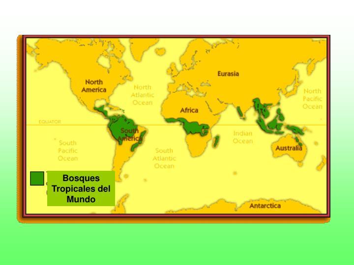 Bosques Tropicales del Mundo