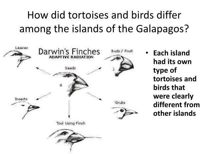 How did tortoises and birds differ among the islands of the Galapagos?