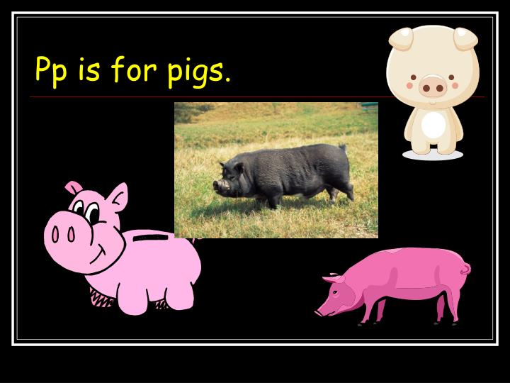 Pp is for pigs.