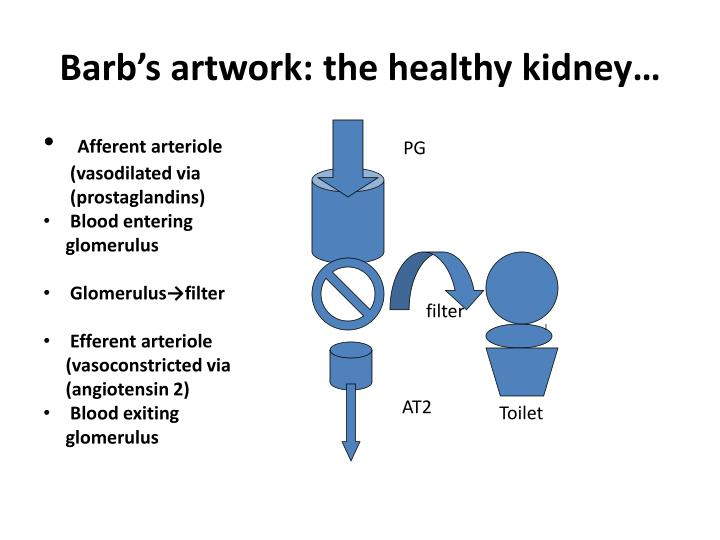 Barb's artwork: the healthy kidney…