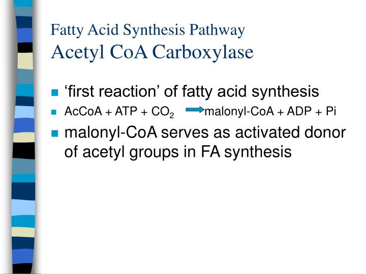 Fatty Acid Synthesis Pathway
