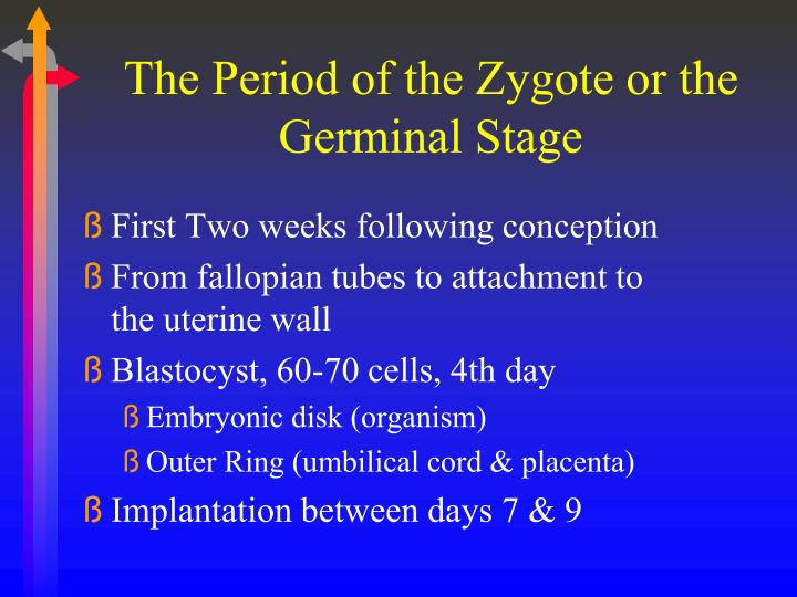 The Period of the Zygote or the Germinal Stage