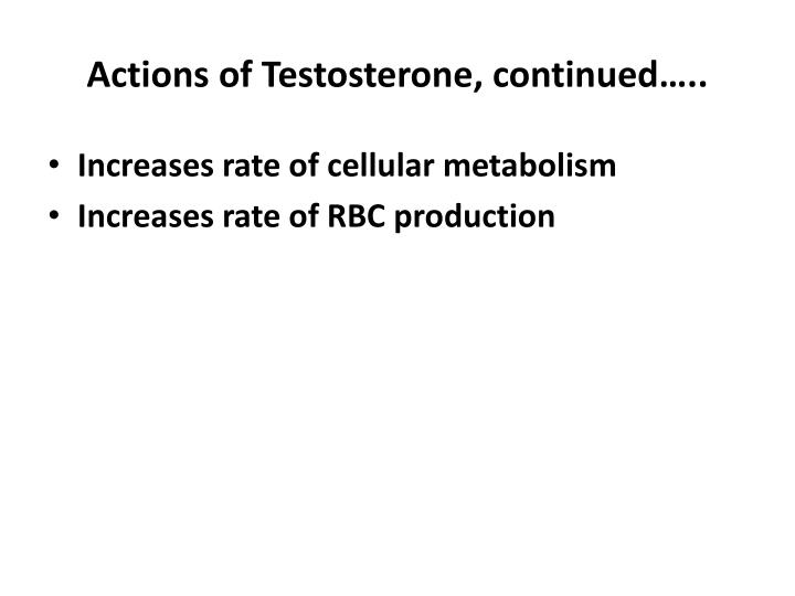 Actions of Testosterone, continued…..