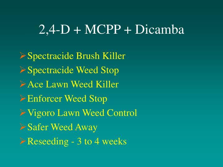 2,4-D + MCPP + Dicamba