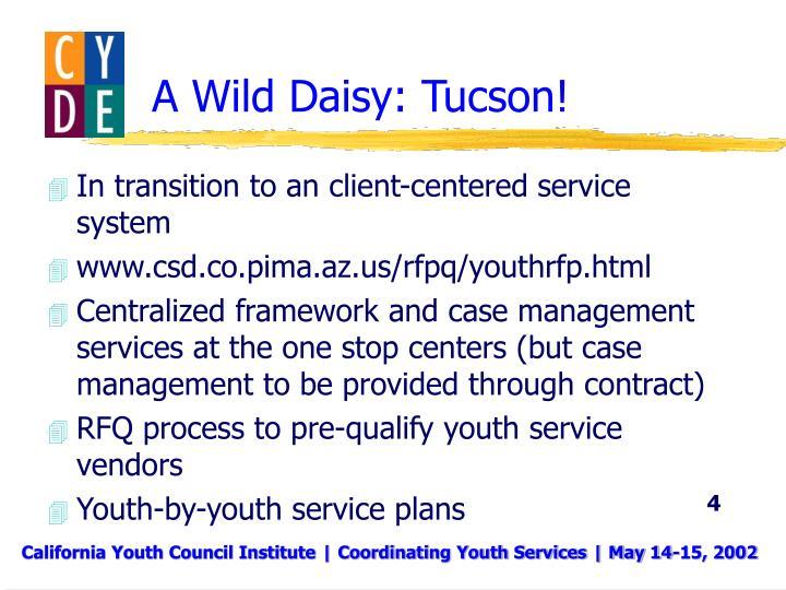 A Wild Daisy: Tucson!