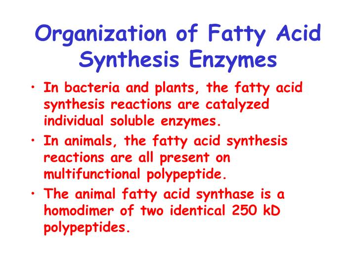 Organization of Fatty Acid Synthesis Enzymes