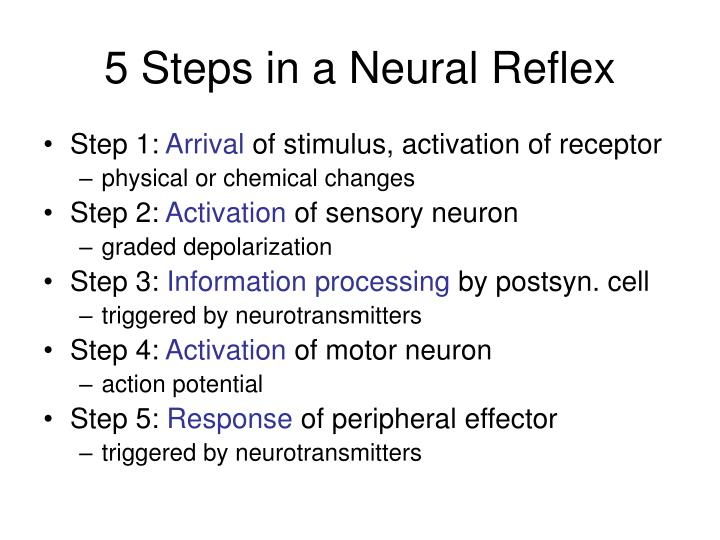 5 Steps in a Neural Reflex