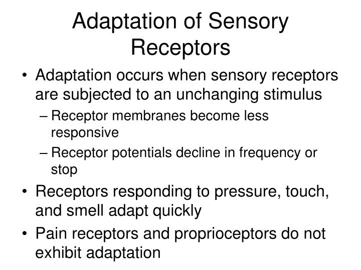 Adaptation of Sensory Receptors