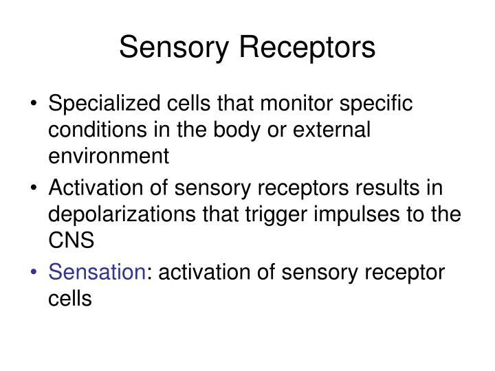 Sensory Receptors