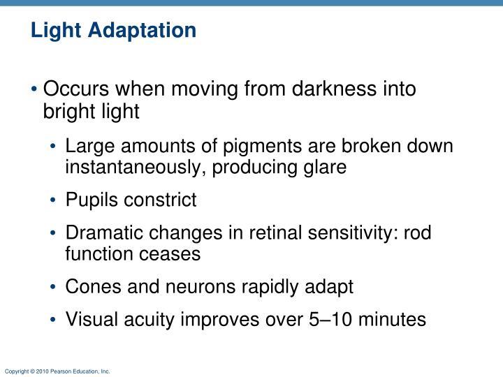 Light Adaptation
