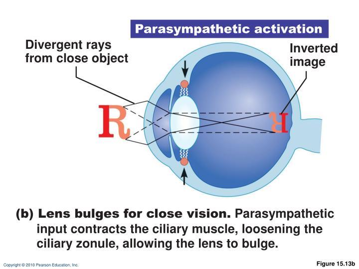 Parasympathetic activation