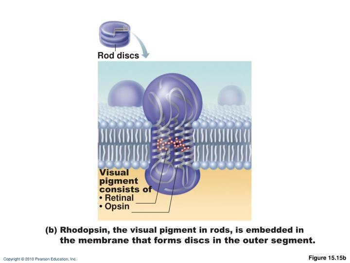 Rod discs