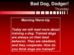 bad dog dodger thursday