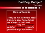 bad dog dodger thursday1