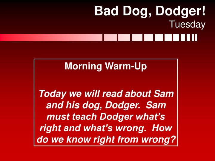 Bad Dog, Dodger!