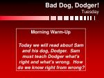 bad dog dodger tuesday