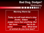 bad dog dodger wednesday1