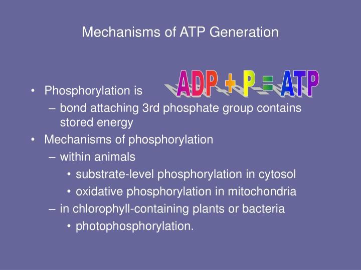 Mechanisms of ATP Generation