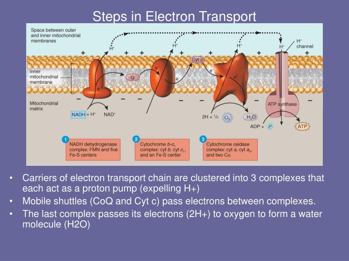 Steps in Electron Transport