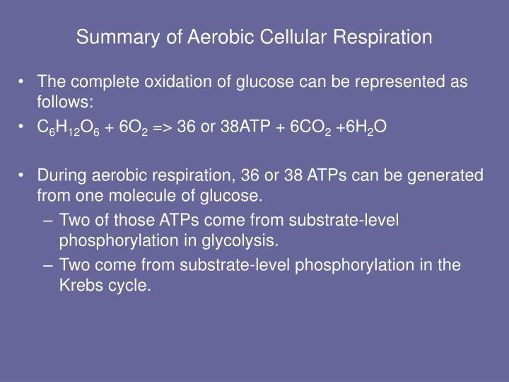 Summary of Aerobic Cellular Respiration