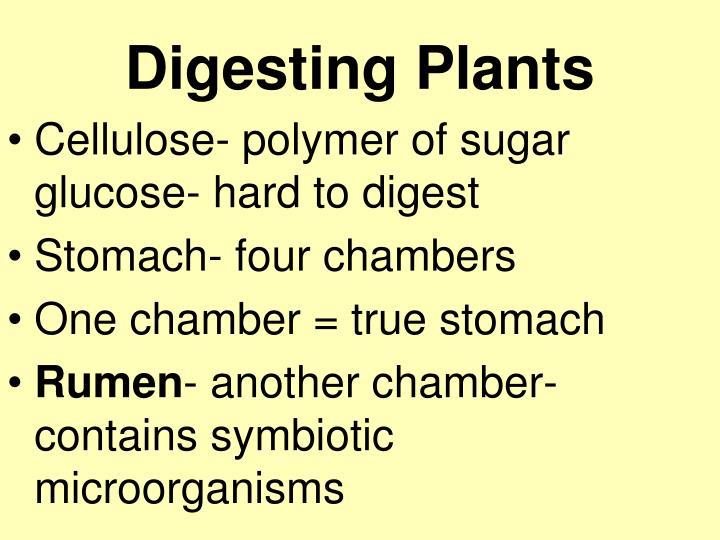 Digesting Plants