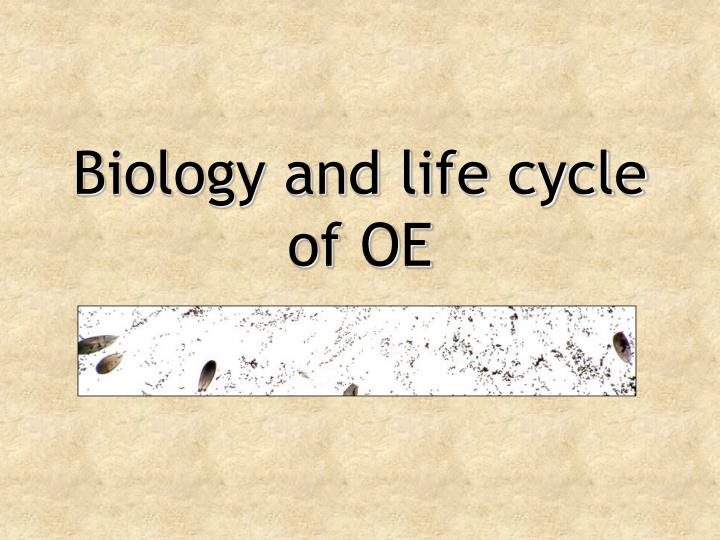 Biology and life cycle of OE