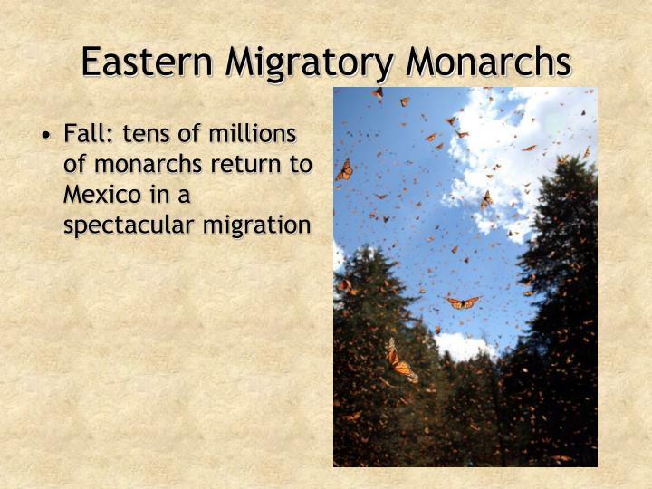 Eastern Migratory Monarchs