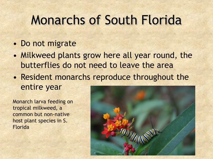 Monarchs of South Florida