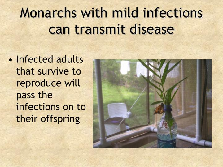 Monarchs with mild infections can transmit disease