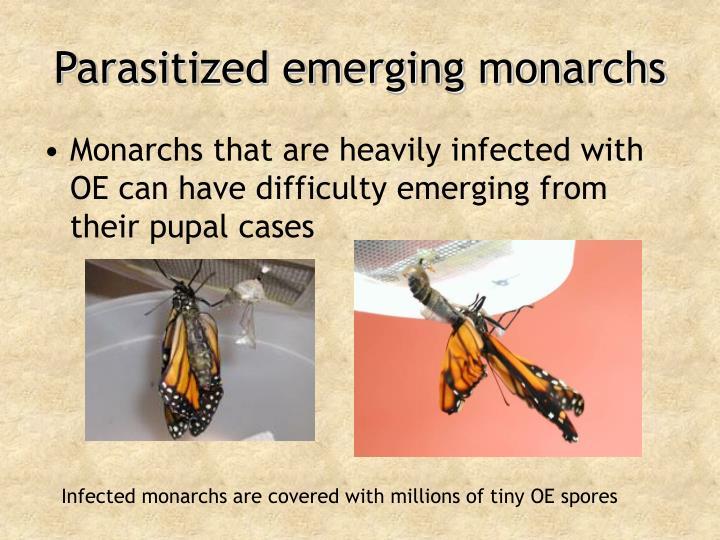 Parasitized emerging monarchs