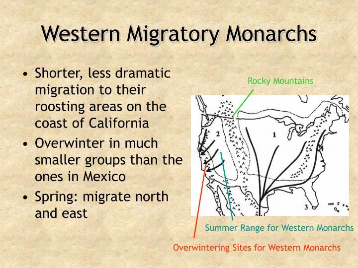 Western Migratory Monarchs