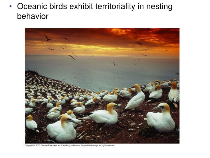 Oceanic birds exhibit territoriality in nesting behavior