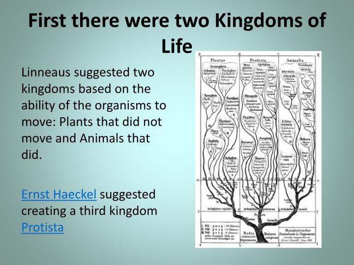 First there were two Kingdoms of Life