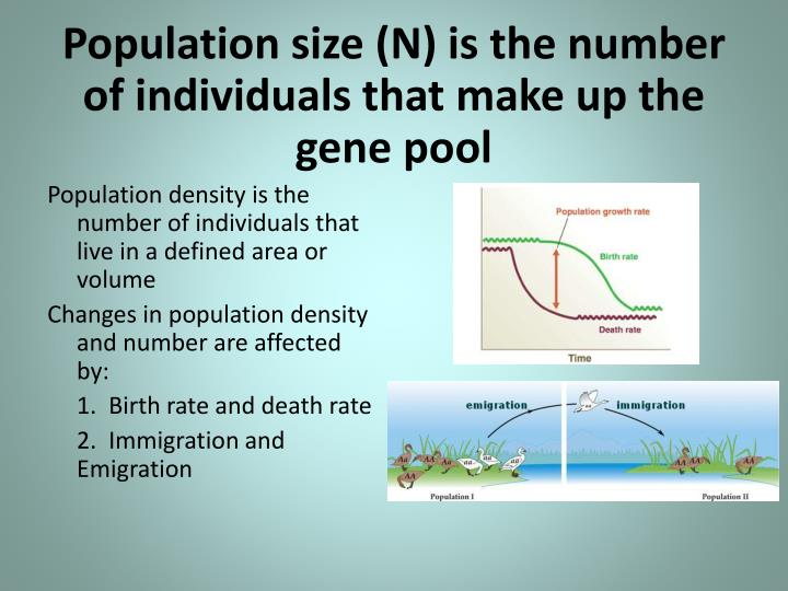 Population size (N) is the number of individuals that make up the gene pool