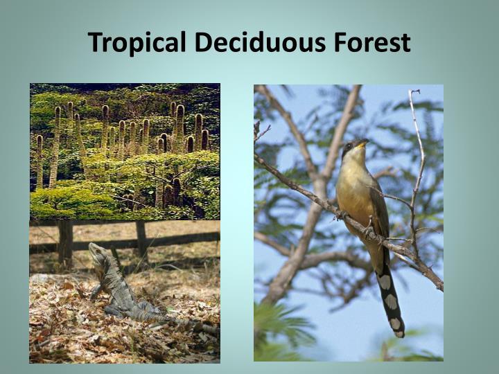 Tropical Deciduous Forest