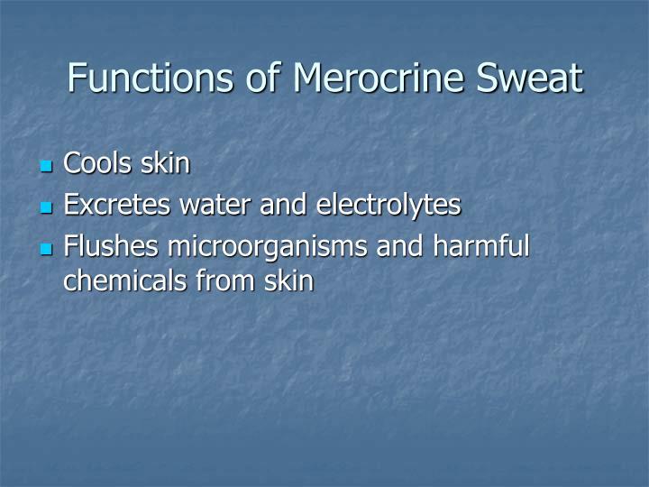 Functions of Merocrine Sweat