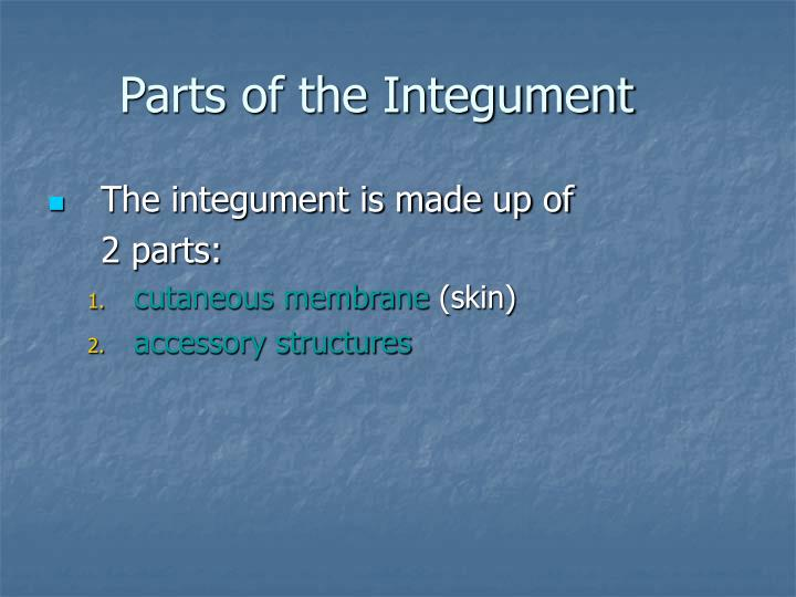 Parts of the Integument