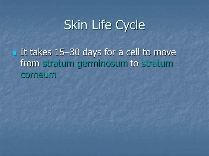 Skin Life Cycle