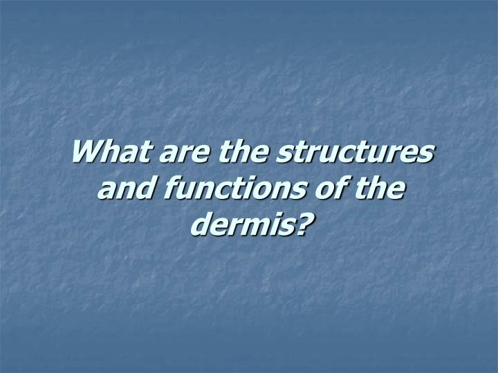 What are the structures and functions of the dermis?