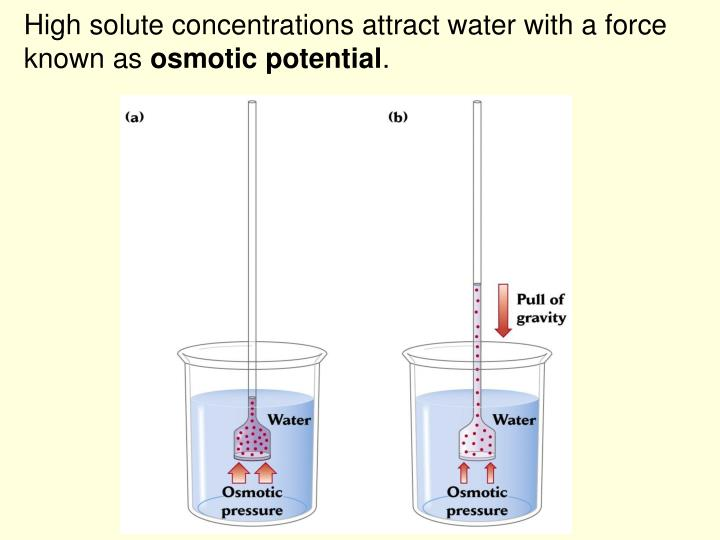 High solute concentrations attract water with a force known as