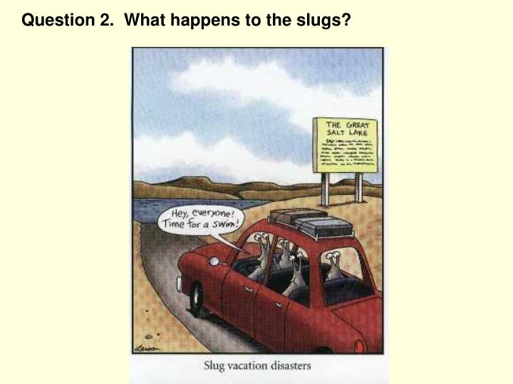 Question 2.  What happens to the slugs?