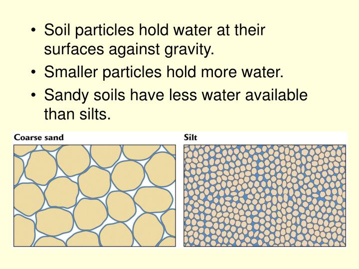 Soil particles hold water at their surfaces against gravity.