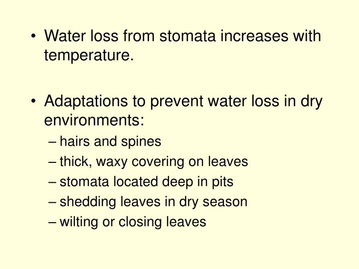 Water loss from stomata increases with temperature.