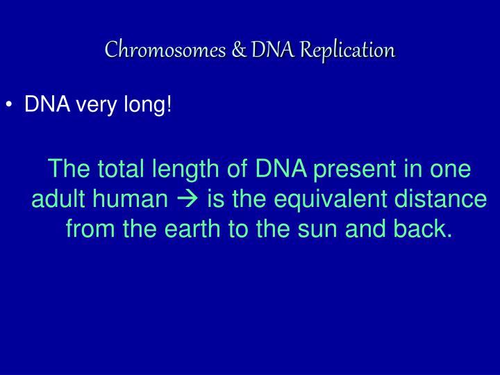 Chromosomes & DNA Replication