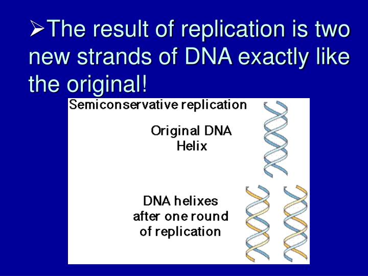 The result of replication is two new strands of DNA exactly like the original!