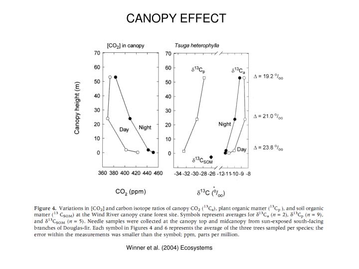CANOPY EFFECT